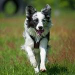 Hunde verstehen lernen: Mehr als Sitz Platz Steh
